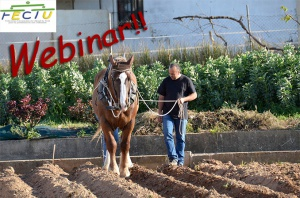 FECTU Webinar - The education of the young working horse