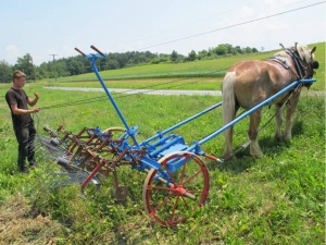 Hand labor, tractor labor and horse labor: a question of power and scale